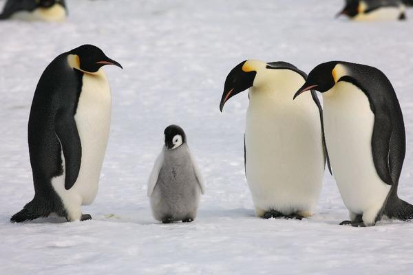 2016年9月の報酬ついでに今後のペンギンちゃん対策と打率とウシジマ君